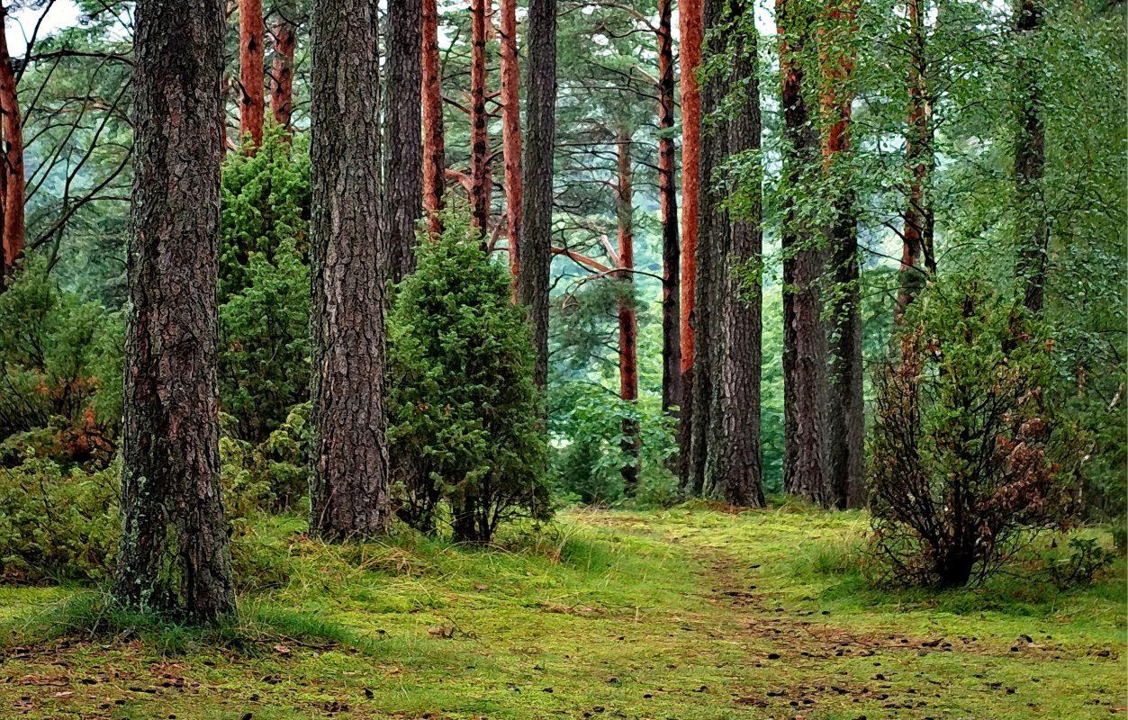 Wald als Inspirationsquelle für Kreatives Schreiben Methoden und Tricks
