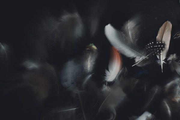 Fliegende Federn